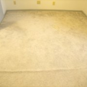 minnesota carpet cleaner