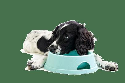 Voedselallergie bij de hondAllergie bij honden