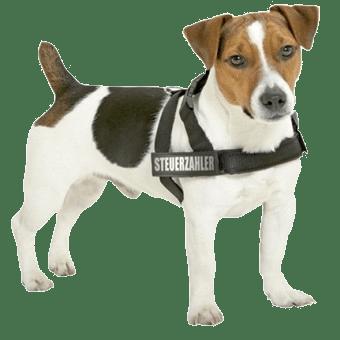 Welk tuig is het beste voor je hond Hondentuigen