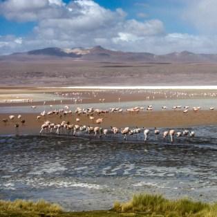 Laguna Colorada in Bolivien