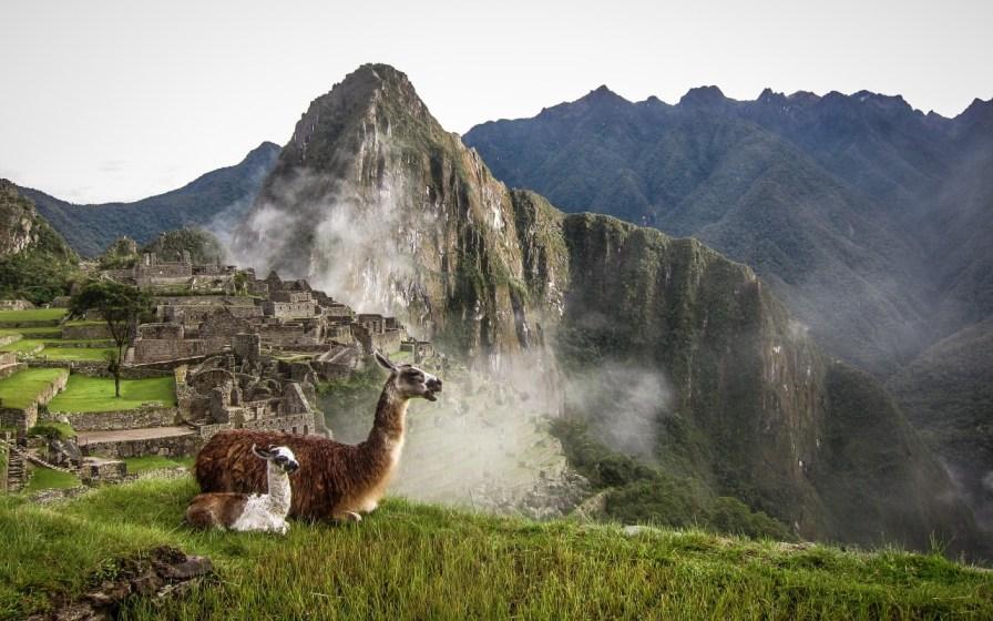 Lama in Machu Picchu