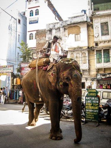 Elefant in Udaipur