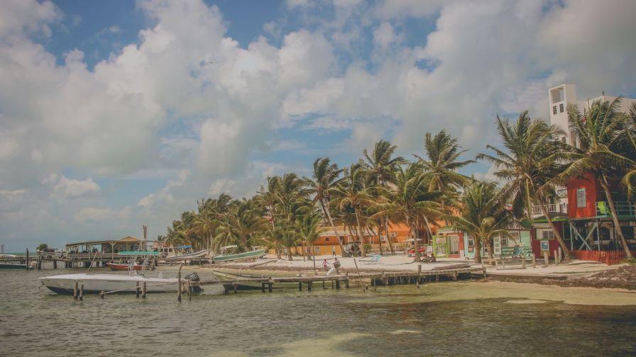 Palmen am Ufer von Caye Caulker