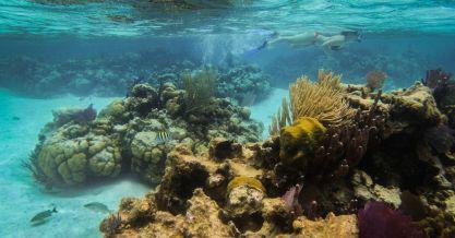 Unterwasser Riff
