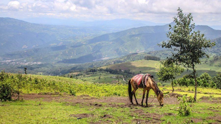Am Rand des Vulkans Acatenango