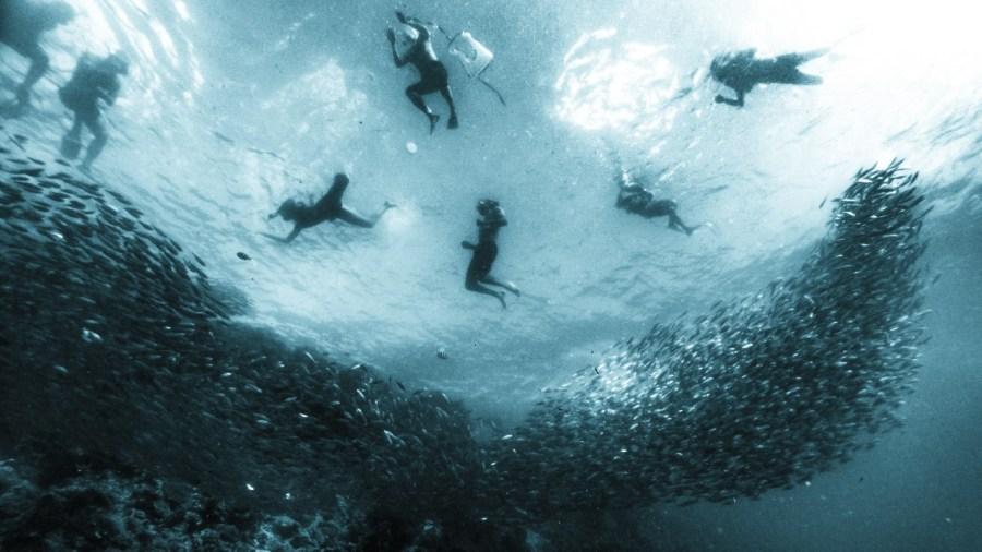 Schwimmer und Sardinen in Moalboal
