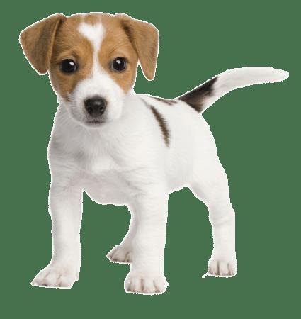 Puppycursus Barneveld