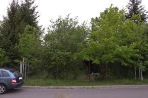 Grundstück vorher