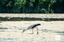 Die Rieselfelder gehören zu den wichtigsten Vogelschutzgebieten Europas. (Foto: Michael Bührke)