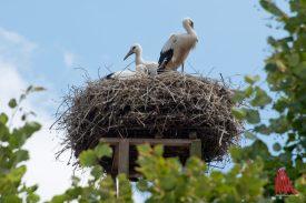 """Auf dem Dach des Restaurants """"Heidekrug"""". (Foto: Michael Bührke)"""