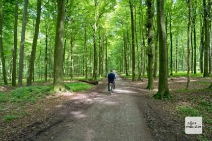 Tolle Buchenwälder in den Baumbergen