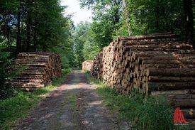 Holzwirtschaft in der Davert. (Foto: Michael Bührke)