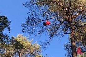 Die Sonde ist in der Nähe von Greven in einem Baum gelandet, konnte aber mit einigen Mühen gerettet werden. (Foto: Stratoflights)