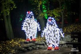 Der Christmas Garden im Allwetterzoo Münster. (Foto: ALLES MÜNSTER / nn)
