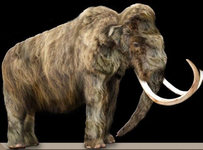 Mammoet - TOP 10 EXCTINCT ANIMALS IN HISTORY | PERISHED ANIMALS SPECIES