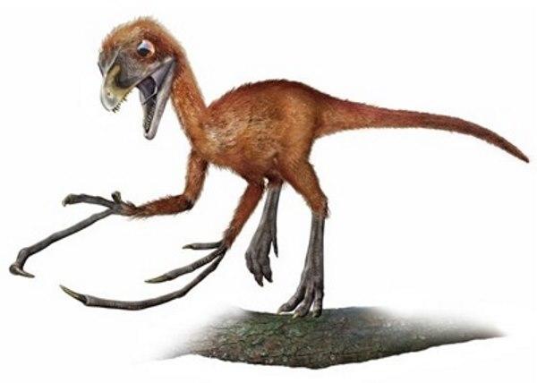 Scansoriopteryx - TOP 10 STRANGEST DINOSAURS