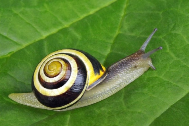 Tuinslak - TOP 10 MOST SLOWEST ANIMALS ON THIS PLANET