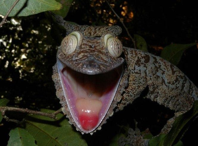 bladstaartgekko - TOP 10 Animals With Bizarre Big Eyes