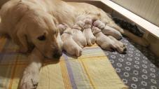 I cucciolini a poche ore di vita