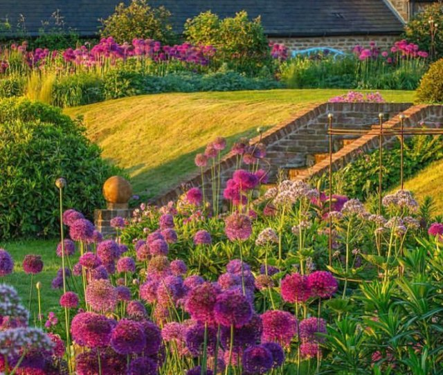 Gardendesignmag Love Allium Wonderful Photo By Esteemed Garden Photographer Clivenichols Clive