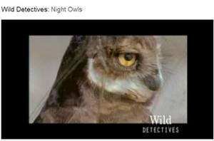 night owl video