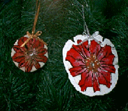 sand dollar poinsettia