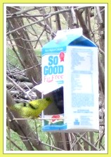 milk carton bird feeder
