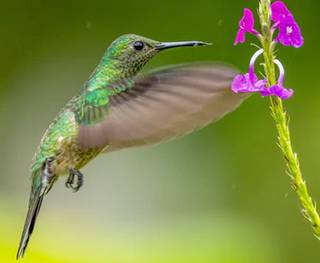 blur of hummingbird wings