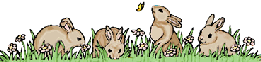 bunnies in the grass