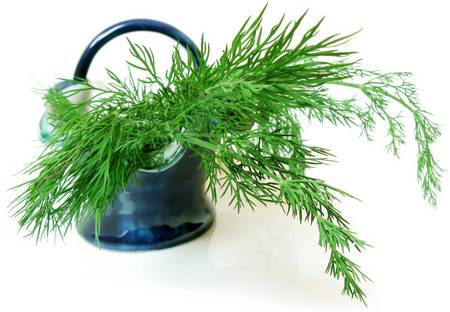 green fronds of dill