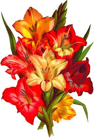 botanical painting of mixed gladiolus bouquet