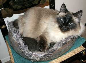 knitted felted cat bed
