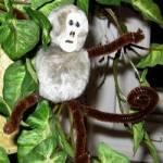 Pompom Monkey