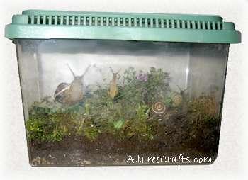 pet snail habitat