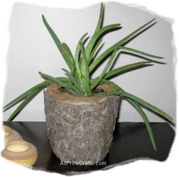 tree bark pot