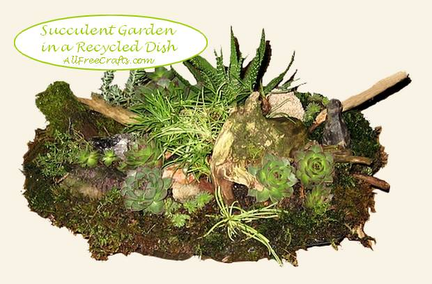 succulent garden in a recycled shallow dish