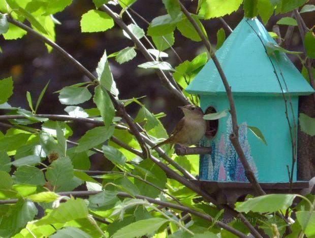 wren perched on a decoupage bird box