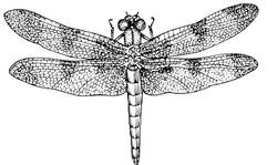 dragonfly clip