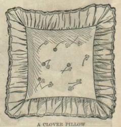 1904clover