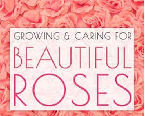 Beautiful Roses Font