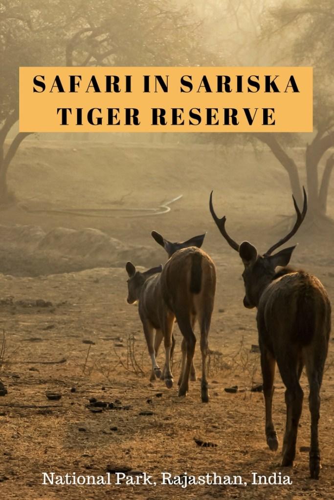 Jungle Safari in Sariska Tiger Reserve