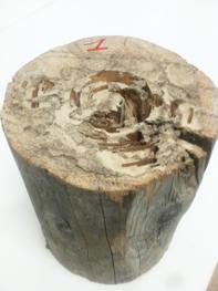 certification termite