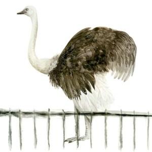 Allied Artists-Dorien Brouwers-illustration