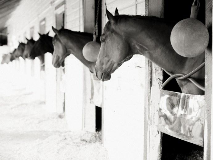 saratoga-race-track-thoroughbred-horses-equine-photography-10
