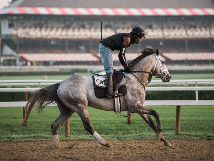 saratoga-race-track-thoroughbred-horses-equine-photography-13