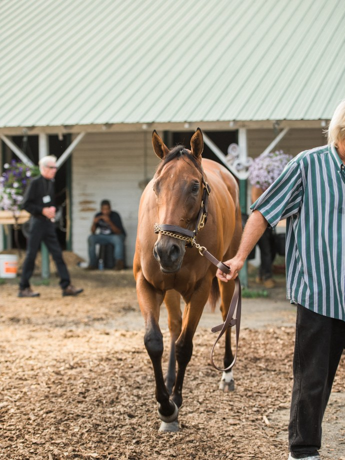saratoga-race-track-thoroughbred-horses-equine-photography-21
