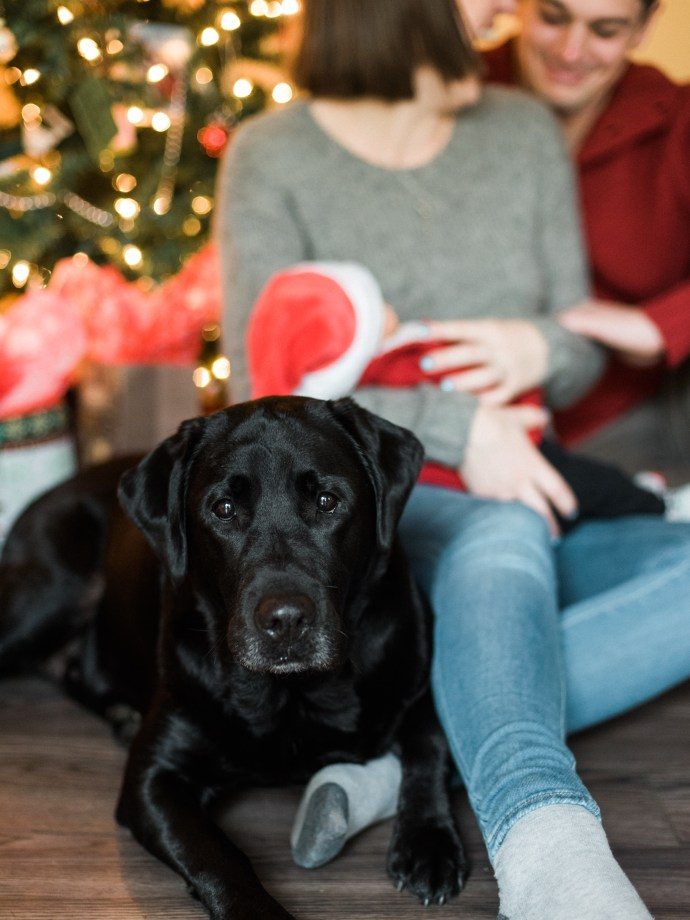family-photography-lifestyle-newborn-dog-in-home-allie-jennings-photo-24