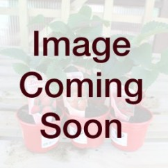 All Weather Wicker Outdoor Chairs Bathroom And Stools Smart Garden Eureka Firefly Solar Lantern Large