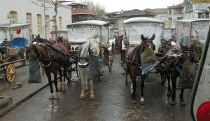 Horses in the Cab Line
