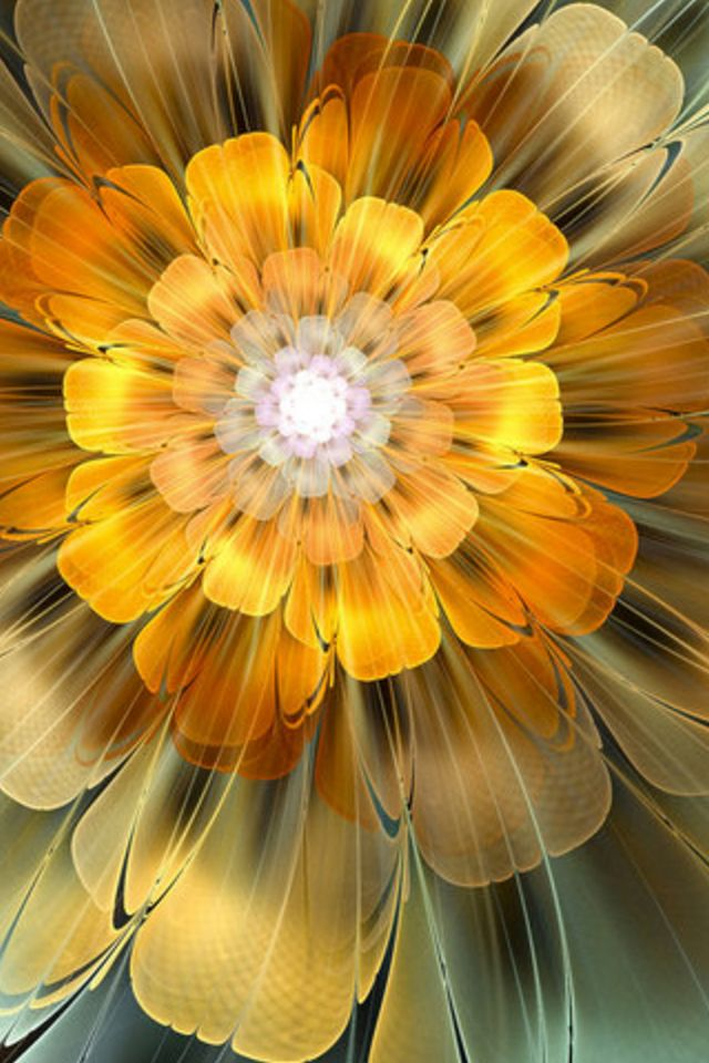 Iphone 5 Wallpaper Floral Abstract Flower Iphone Wallpaper Hd